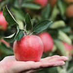 3 fructe care scad glicemia
